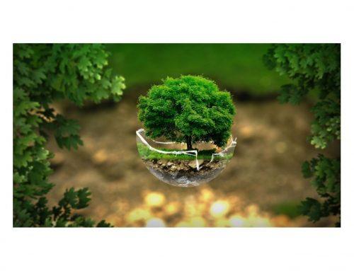 Donnez un coup d'envoi à votre transition énergétique et écologique grâce au Management de transition !